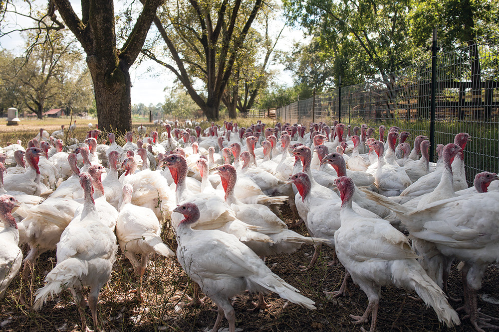 Bates Turkey Farm